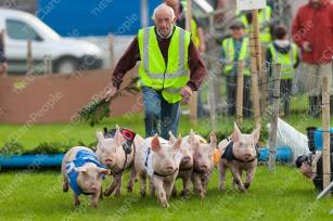 The late Pat(Birdy) Considine RIP, with his racing pigs at the Festival of Fun (c) Clare People